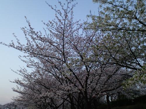 sakura2009-4-5-2.jpg